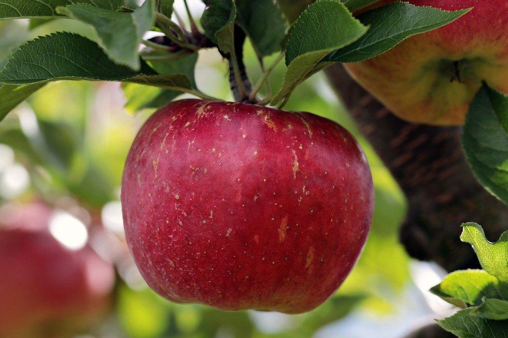 Alles over de razend populaire appel