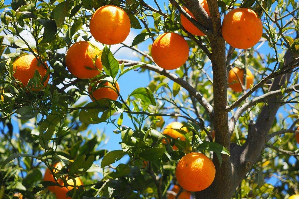 De veelzijdigheid van citrusfrui